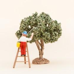 Le cueilleur d'olives sur échelle