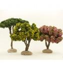 Le coffret de 5 arbres de Provence